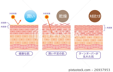 skin, cross-section diagram, turnovers 26937953