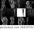3D rendering illustration of the female anatomy 26939743