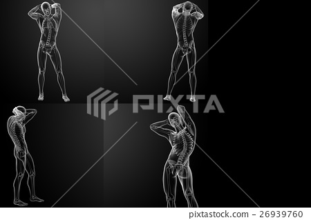 3D rendering of the  skeletal 26939760