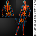 3D rendering of skeleton 26944178