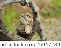 花鼠 松鼠 小動物 26947289