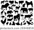 동물, 벡터, 애니멀 26948858