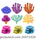 Different types of coral reef 26972926