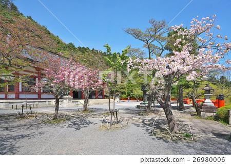 Sakura Blooming Kurama Temple 26980006
