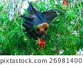 棒球棒 蝙蝠 黑色 26981400