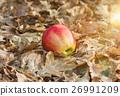 apple, autumn, fall 26991209