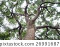 tree, trees, bole 26991687