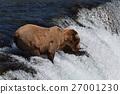 animal, animals, wild 27001230
