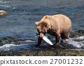 animal, animals, wild 27001232