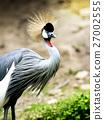 Gery Crowned Crane - Balearica Regulorum Bird 27002555