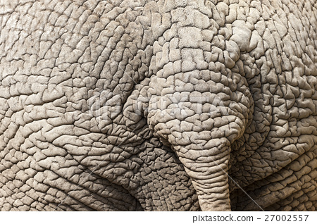Elephant Skin Detail with Tail 27002557
