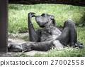 Gourmet Chimpanzee Monkey Licking Fingers 27002558
