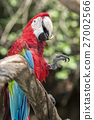 Ara Parrot - Red and Blue Sitting on Branch 27002566