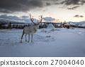 Reindeer in Norway 27004040