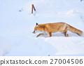 ezo red fox, fox, winter 27004506