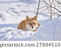 蝦夷紅狐狸 狐狸 冬天 27004510