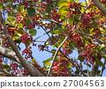 과실, 열매, 조류 27004563