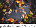 foliage, maple, leaf 27009712