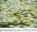 กบ,แหล่งน้ำ,สระน้ำ 27012343