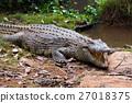 crocodile, Crocodile, reptilian 27018375