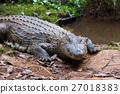 crocodile, Crocodile, reptilian 27018383