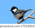 大山雀 山雀 鳥兒 27028950
