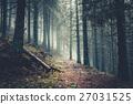 Trail in a dark pine forest 27031525