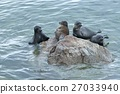 The Baikal seal nerpa  27033940