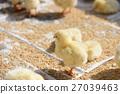 chick, chicks, baby 27039463