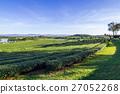 พื้นหญ้า,ทุ่งนา,นา 27052268
