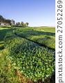 พื้นหญ้า,ทุ่งนา,นา 27052269