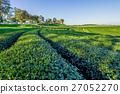 สวน,ทุ่งใบชา,พื้นหญ้า 27052270