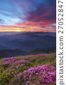 rhododendron,sunset,mountain 27052847