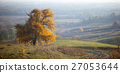 lonely big tree, yellow autumn leaf , fog 27053644