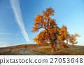 lonely big tree, yellow autumn leaf, blue sky 27053648