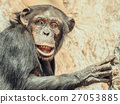 African Chimpanzee In Tree Portrait 27053885