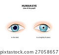 Pupil Dilated and Pupil constricted 27058657