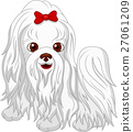 Cute Maltese dog cartoon 27061209