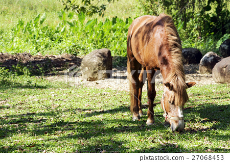Brown horse pasturing in a rural landscape. 27068453