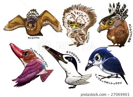 wild bird, iriomote-jima, iriomote island 27069901