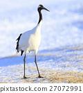 crane, cranes, japanese 27072991