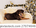 Tibetan mastiff, christmas concept 27074646