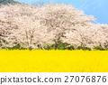 벚꽃과 유채 꽃밭 27076876