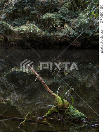 天然盆栽 水池 27080480