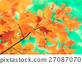 Oak branch with yellow leaves 27087070