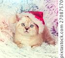 Little kitten wearing Santa hat 27087570
