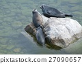 The Baikal seal nerpa 27090657