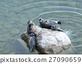 The Baikal seal nerpa 27090659