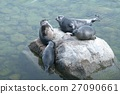 The Baikal seal nerpa 27090661