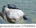 The Baikal seal nerpa 27090665
